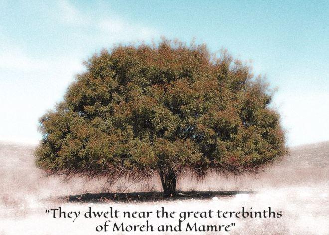 Judah and Tamar Tree Terebinth